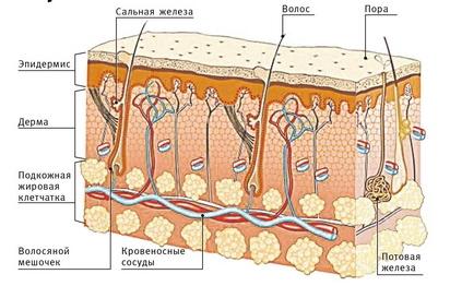 Причины и лечение себорейного дерматита кожи головы thumbnail