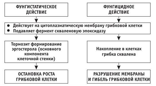 Принцип действия препаратов против микоза